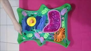 Célula vegetal - apresentação