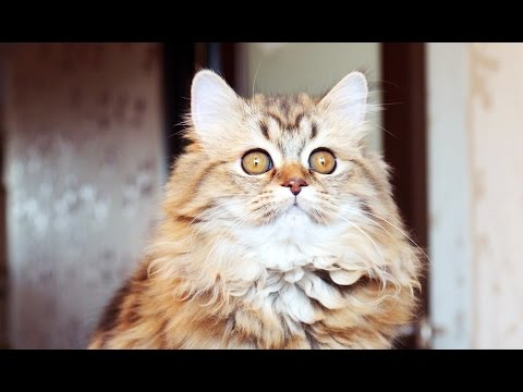 Funny Cats Compilation | Panda and P6 kittens !
