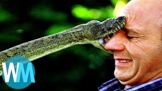 Top 10 des serpents les plus DANGEREUX du monde !