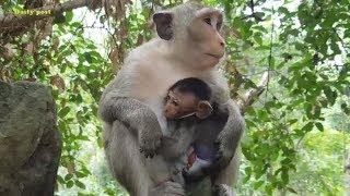 Poor baby Milto frustrates mom Milta | Milto cries with anger to mom | What a poor baby Milto!