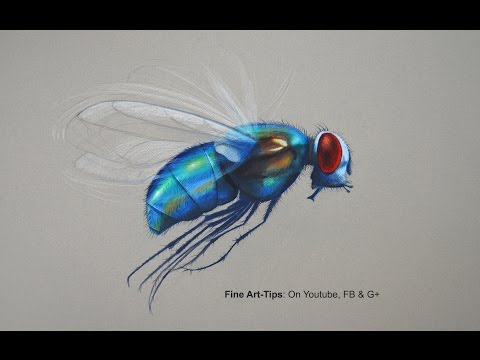 How to Draw a Fly With Color Pencils - The World's Handsomest Fly