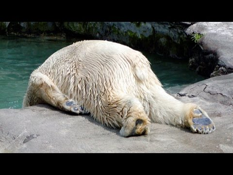 Polar bear on the lash - Russell Howard's Good News: Episode 6 - BBC Two