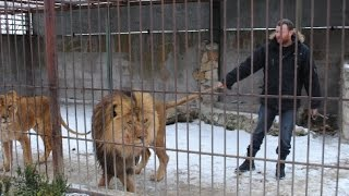 Man in a cage with Lions