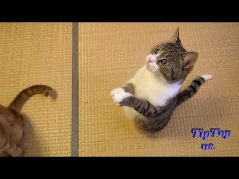 Гангста коты(funny gangsta cats)