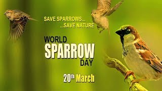 World Sparrow Day   News in Science.