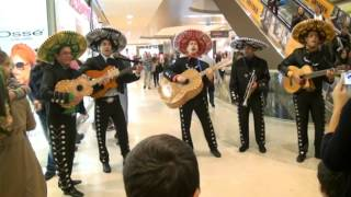 Little Mariachi Band