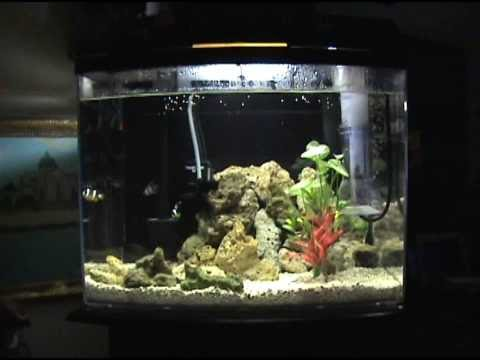 *NEW* -- Salt Water TANK!