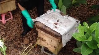 ong chúa mất lâu ngày và cách khắc phục phần 2