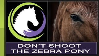 Don't Shoot the Zebra Pony