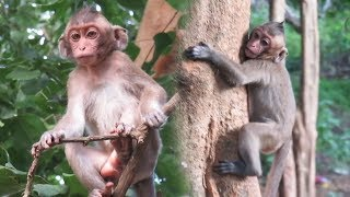Adorable Baby Lost Mom and Daily Life Of Monkeys, We Give Food Every Day