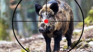 DOCUMENTAIRE CHASSE AU SANGLIER 10 - complet part 6 - Hunting made in italy wild boar