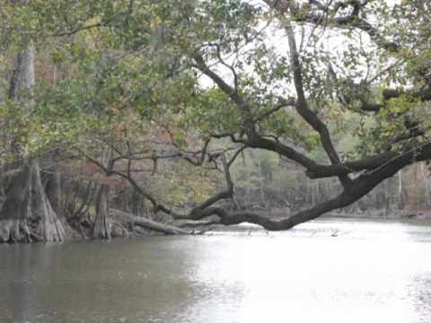 Ivory billed woodpecker habitat along the Choctawhatchee river