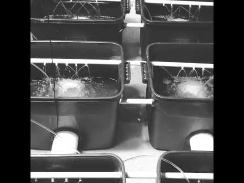 Recirculating Deep Water Culture Aeroponic hybrid remember where you seen it 1st