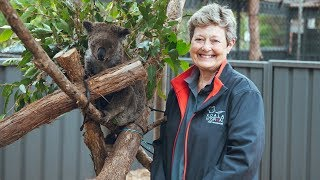 Port Macquarie Koala Hospital with NRMA Insurance