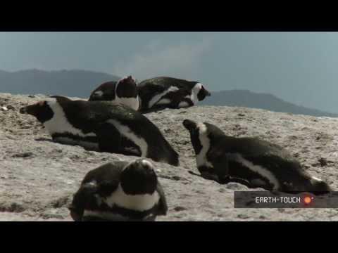 Pomene Estuary, Mozambique - Marine Channel 02 2010