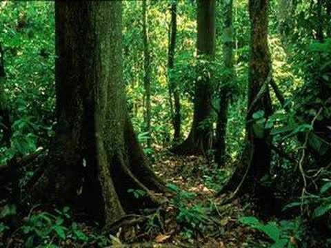 Rainforest Sound