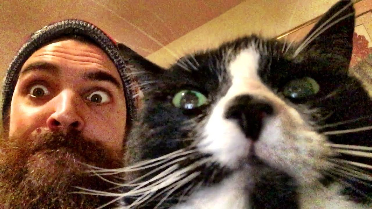 Funny cat faces youtube