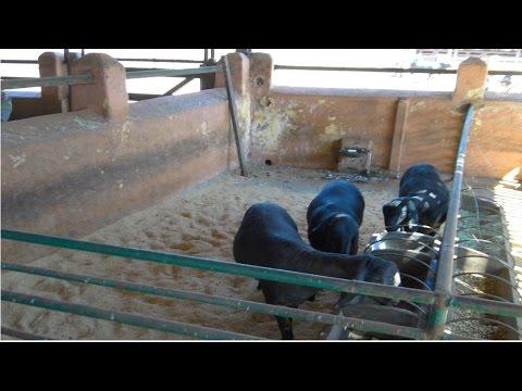 Curso Gerenciamento na Criação de Ovinos - Produção de Alimentos