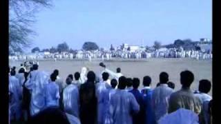 Bull Race (Gujar Khan) july 2010