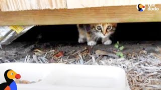 Kitten Abandoned at Playground Rescued by Sweetest Guy | The Dodo