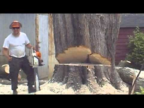 Smith Tree Service Want The Best ? Call JESS!