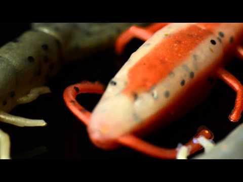 Berkley Gulp! & Gulp! Alive! Hollow Shrimp