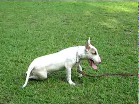 Tarzo en clases ALFA K9 adiestramiento canino SIN MALTRATO para sus