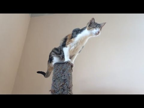 Honey Bee: Conquering The Scratching Post