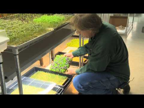 Segment on CC Gardens Microgreens from April 2011 Live Green Tennessee.