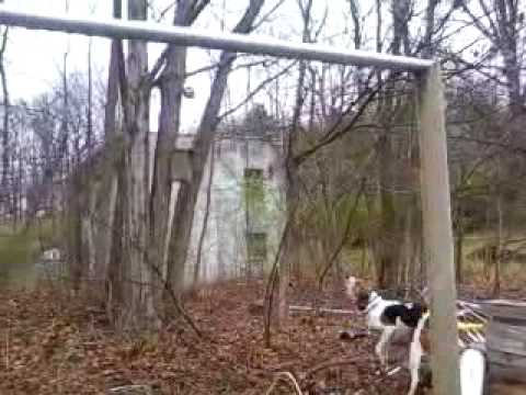 Dog fights Raccoon! better video, crappy audio Video