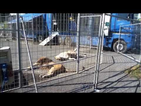 Gli animali nei circhi italiani – Ottobre 2012 – riprese dall'inferno | TerrAnomala