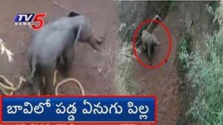 బావిలో పడ్డ ఏనుగు పిల్ల.. రక్షించిన అటవీ శాఖ సిబ్బంది..! | Tamil Nadu