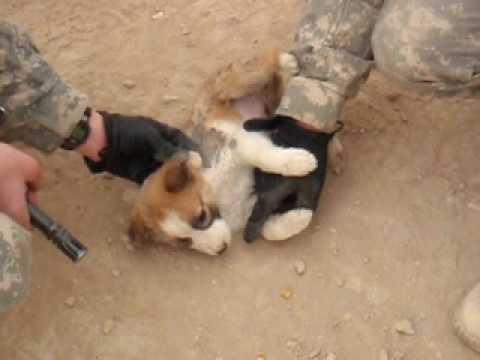 Soldier Throws Puppy