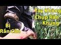 Tay Không Chụp Con Rắn Khủng , 9kg Rắn Vào Buổi Sáng - Võ Minh Phụng Bẫy Rắn thumbnail