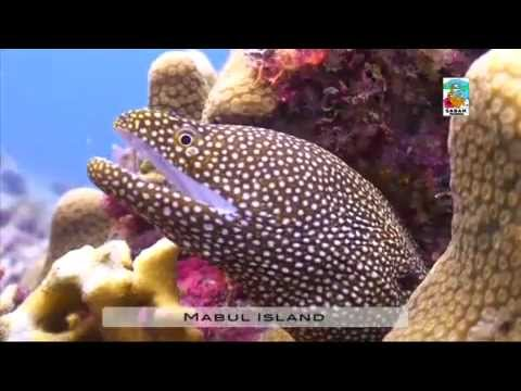 1001 Adventure Tours | Travel Blog - Travel Minute | Dive Sabah - Malaysia