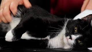 How to Pet or Massage Your Cat | Cat Care