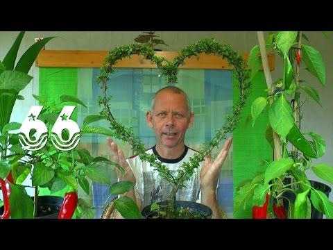 Die Sämlinge und wie geht es weiter mit den Exoten und anderen Pflanzen Teil 66