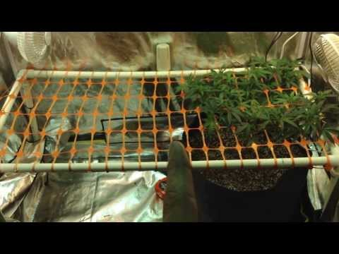 Perpetual 4x2 Grow Tent   Season 1 Ep.1  The Start