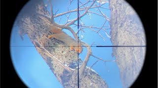 EPIC Squirrel Hunting with Pellet Gun (SCOPE CAM) - Kill and Cook