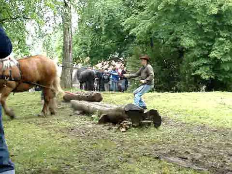 Zrywka drewna - Smolajny 2009