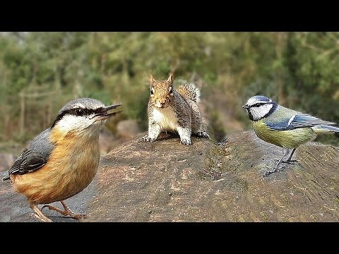 Relaxing Videos for Dogs to Watch at Home : Birds in The Forest