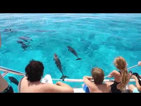 Dolphin Tales 5/2014 - Underwater with the Dolphins