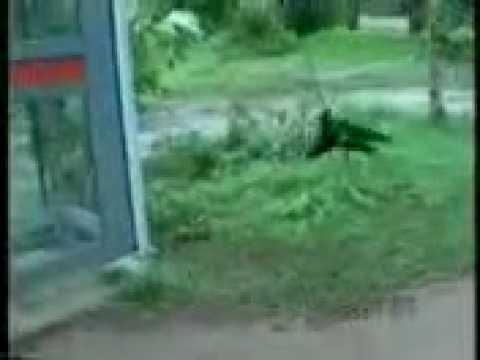 Lankawe Skype Kollo Kello video