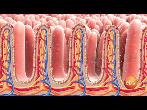 New Life አዲስ ሕይወት: Coverage on Stomach Pain - የጨጓራ ህመም ዙርያ የተሰራ ዘገባ