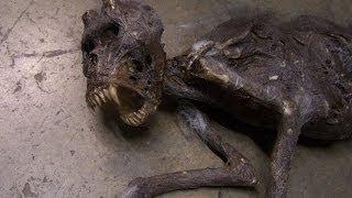 Encuentran cadaver del chupacabras en Campeche @OxlackCastro