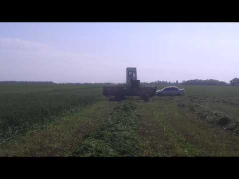 косим люцерну на сено mowing alfalfa hay 2015.05.19