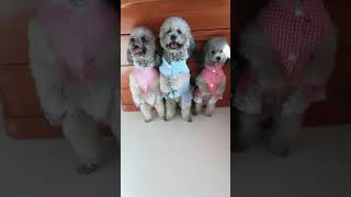 Look at these cute and funny puppies dogs 1693