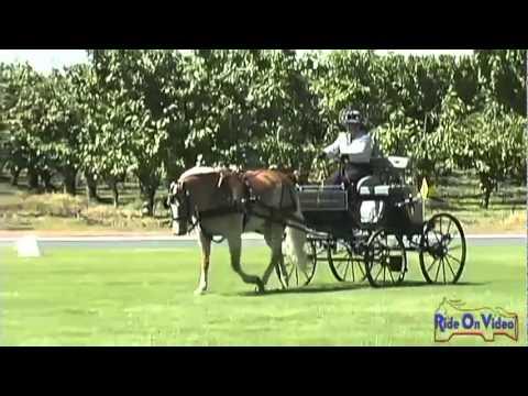 50D Dana Moore Intermediate Single Pony Dressage at Shady Oaks CDE 2011