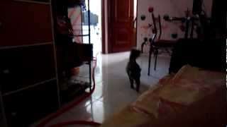 Funny Little Cat Play With Me