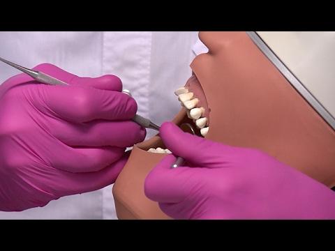 Семь лет учебы, чтобы стать стоматологом